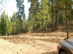 2 Parcels on East Shore with Serene Atmosphere….2882 Hwy 147